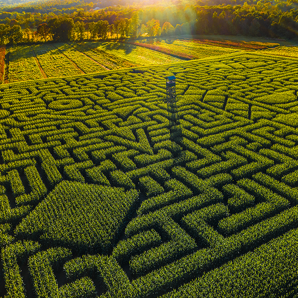 Das riesige Halloween-Mais-Labyrinth in Pennsylvania, Region Poconos